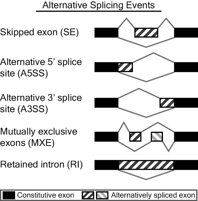 rMATS_splicing