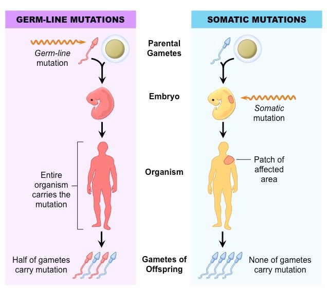 somatic-vs-germline_med